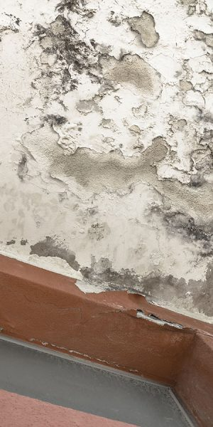 Humidité logement